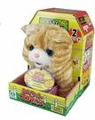 《日本 IWAYA 》甜甜屋蘇格蘭折耳貓 新 / JOYBUS玩具百貨