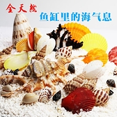 魚缸裝飾貝殼天然海螺貝殼魚缸造景造景水族箱擺件【步行者戶外生活館】