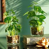 仿真花擺件假四葉草小盆栽家居客廳桌面假花裝飾綠植盆景  HM 居家物語