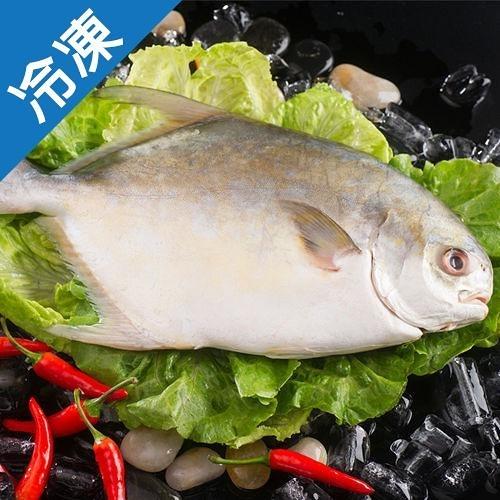 嚴選大金鯧魚600g/尾(真空包)【愛買冷凍】