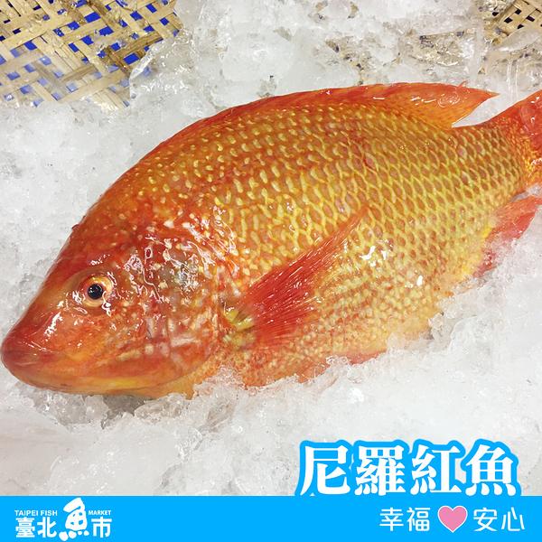 【台北魚市】 尼羅紅魚 480g±10%