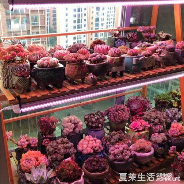 植物燈 植物補光燈led上色全光譜花卉月季苗蔬菜蘭花室內陽光多肉生長燈220V『夏茉生活』