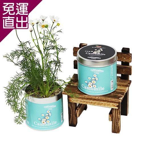 迎光 Cultivation Table栽培罐洋甘菊【免運直出】