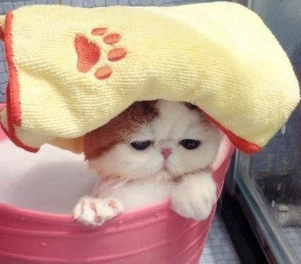 ☆.:*寵物貓【壓克力】(愛狗貓寵物專用)100孔精密半自動膠囊板 填充板+壓粉版 0/1/2/3/4