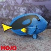 【Mojo Fun 動物星球頻道 獨家授權】 藍刀鯛魚 387269