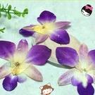 蘭花 蘭草押花畫相框乾花DIY手工壓花 (一份1朵)