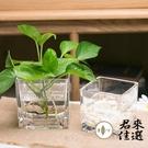 【部分3個裝】正方形水培玻璃器皿透明玻璃...