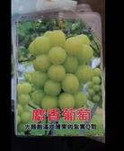 花花世界_水果苗--麝香葡萄,果肉飽滿--香甜不膩/2.5吋/約高10-15cm/Tm