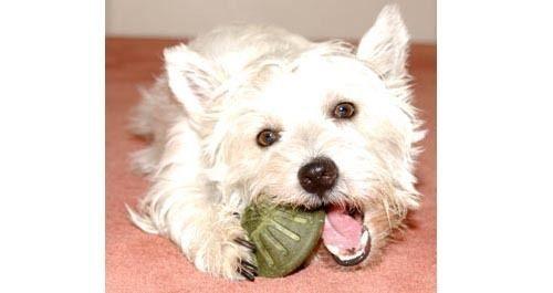 【 培菓平價寵物網】《STAR MARK》星記磨牙餅小號 (小型犬)‧2種口味*1包
