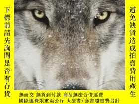 二手書博民逛書店Wolves罕見: Stunning Photographs of Nature s Hunters 狼的攝影集