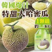 【果之蔬】韓國特大哈密瓜1入禮盒X1盒(約1.5公斤/盒(日本品種))