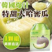 【果之蔬-全省免運】韓國特大哈密瓜1入禮盒X1盒(約1.5公斤/盒(日本品種))