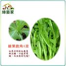 【綠藝家】大包裝A40.綠葉鹿角妹仔菜種...