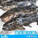 【台北魚市】 珍珠龍膽石斑 ( 龍虎斑 ...