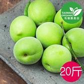 甲仙農會新鮮有機青梅20台斤