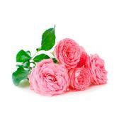 Visakha - 摩洛哥玫瑰 Rose 單方精油 (30ml)