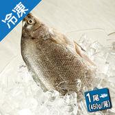 產銷活凍貴妃魚(澳洲銀鱸)/尾【愛買冷凍】