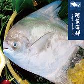 【阿家海鮮】現撈正野生白鯧 淨重450g±10%/隻 白鯧 鮮甜 紮實美味 清蒸 乾煎 三去 年菜