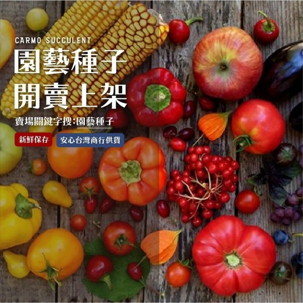 CARMO三色堇混合種子 園藝種子(50顆) 【FR0043】