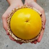 【鮮食優多】加走埤果園•友善種植無毒黃金果5斤2盒(16~20顆)
