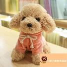 小寵物泰迪布娃娃玩偶狗玩具公仔小狗狗毛絨【小獅子】
