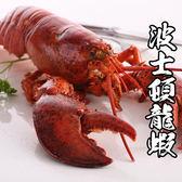 【買一送一】加拿大波士頓龍蝦 *1隻組( 500g±10%/隻 )