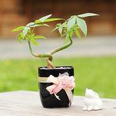 【迎光】花漾黑瓷發財樹