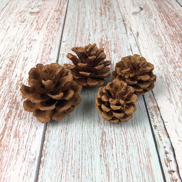 BEAGLE 2-4公分 乾燥花 松果 單顆 松塔 素材 不凋花 人造花 乾燥花束 花藝設計 婚禮佈置 攝影佈景