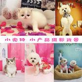 浪LIVE UP 貓播主播背景布產品拍攝背景布 小寵物 拍照背景布 可愛卡通嬰兒攝影背景訂製