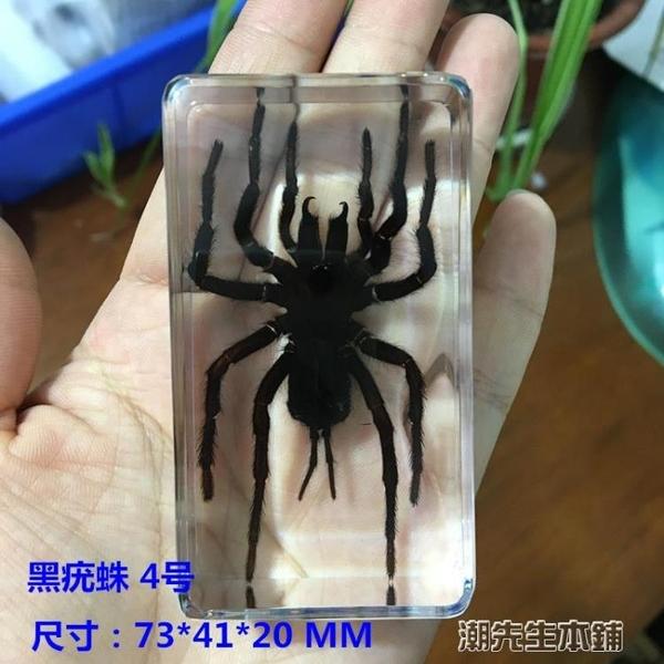 動物標本 千年蟲真實動物昆蟲樹脂標本蝎子蟬蜘蛛甲蟲蜈蚣鍬甲天牛擺件 城市科技DF