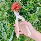 園藝剪刀 樹枝剪 農用剪刀 直剪 彎剪 ...