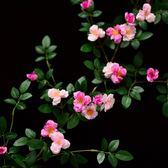 仿真玫瑰花藤薔薇藤蔓假花壁掛