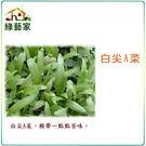 【綠藝家】A18.白尖A菜種子 (尖葉種...