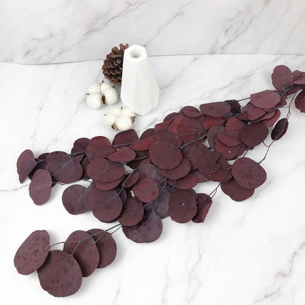 50-60CM進口永生大圓尤加利葉 -不凋乾燥花圈 乾燥花束 不凋花 拍照道具 室內擺飾 乾燥花材 -88元/支