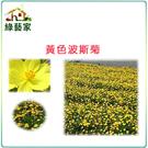 【綠藝家】H07.黃色波斯菊種子300顆