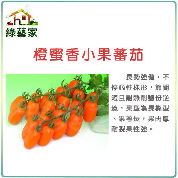【綠藝家】大包裝G73.橙蜜香小蕃茄種子40顆
