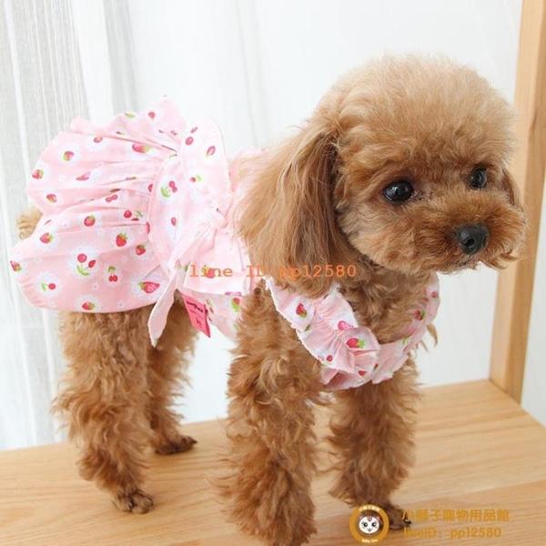 可愛水果裙子網紅泰迪貓咪春裝薄款比熊博美寵物衣服小型犬小狗狗【小獅子】