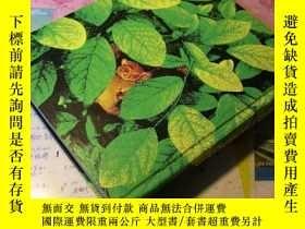 二手書博民逛書店1980年basic罕見biology 基礎生物學 作者:ric