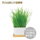 PurrFact 波菲特日式陶瓷貓草組_方