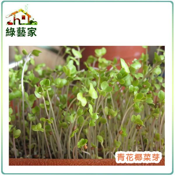 【綠藝家】J03.青花椰菜芽(芽菜種子)種子2000顆