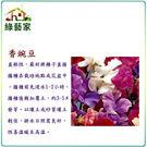 【綠藝家】H42.香豌豆(混合色)種子10顆