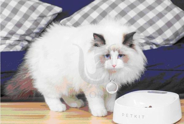 ◆MIX米克斯◆【佩奇】智能抗菌寵物碗 陶瓷白 (犬.貓適用) 低功耗智能節電待機1年PKS-001