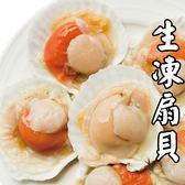 【海肉管家】生凍頂級半殼大扇貝X1包(500g±10%/包)