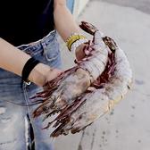 ㊣盅龐水產◇海熊蝦251/300(2入)◇重量500g±10%/包(2入/包)◇零$1070元/包◇超胖巨無霸 大鵰蝦