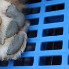 寵物墊 狗墊子塑料墊板 貓籠狗籠子腳墊板 寵物墊板底網漏糞板網格養殖板【快速出貨八折下殺】