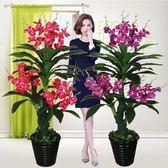 假樹蘭花蝴蝶蘭樹仿真植物落地盆栽大型客廳盆景塑料花裝飾花綠植 【特惠免運】