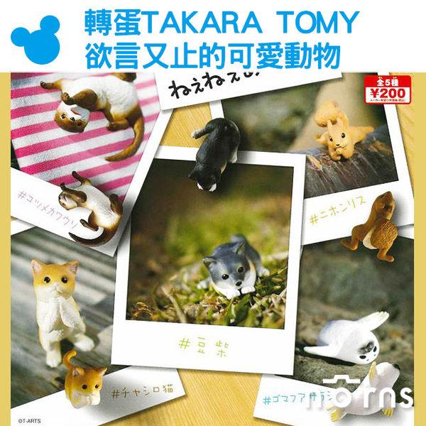 Norns【轉蛋TAKARA TOMY欲言又止的可愛動物】日本 扭蛋 公仔 玩具 擺飾  柴犬 貓咪 松鼠 海豹 水獺