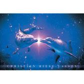 【P2 拼圖】夜光 海豚系列-鳴夜光(1000pcs) HM1000-142