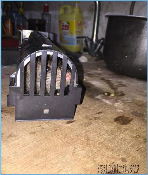 透明版 家用捕鼠器 老鼠籠 靈敏 滅鼠器誘鼠器【潮咖地帶】