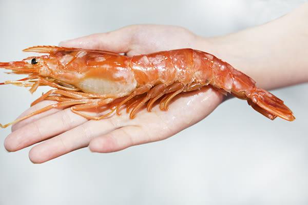 ㊣盅龐水產◇L1特級天使紅蝦10/20◇淨重2kg±5%/盒(約30~40隻)◇零$710 黑盒、藍盒、檸檬牌隨機出貨